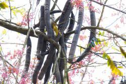 베트남을 대표하는 열대 과일 6가지 소개